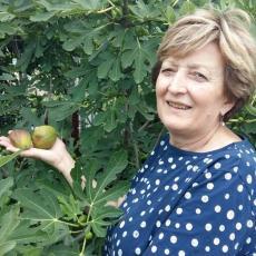 U Ljiljaninoj bašti RASTU OGROMNE SMOKVE: Voće ove Kraljevčanke tri puta veće od proseka (FOTO)