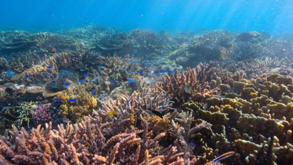 U OVOM OKEANU RASTU OSTRVA: naučnici otkrili da se to dešava uprkos porastu nivoaa mora, a za sve su zaslužne ribe