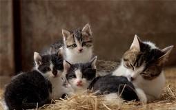 U Omanu žena živi sa 480 mačaka i 12 pasa
