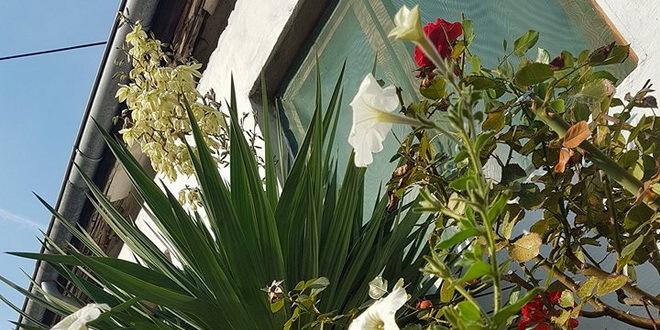 U Pančevu izabrane najlepše bašte i balkoni