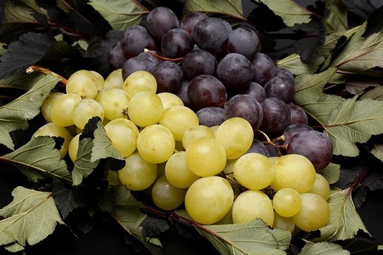 U Srpsku zabranjen uvoz grožđa iz Sjeverne Makedonije