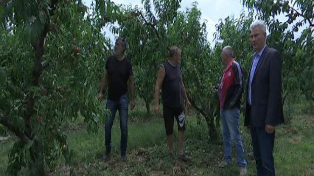U Vinči uništeni voćnjaci