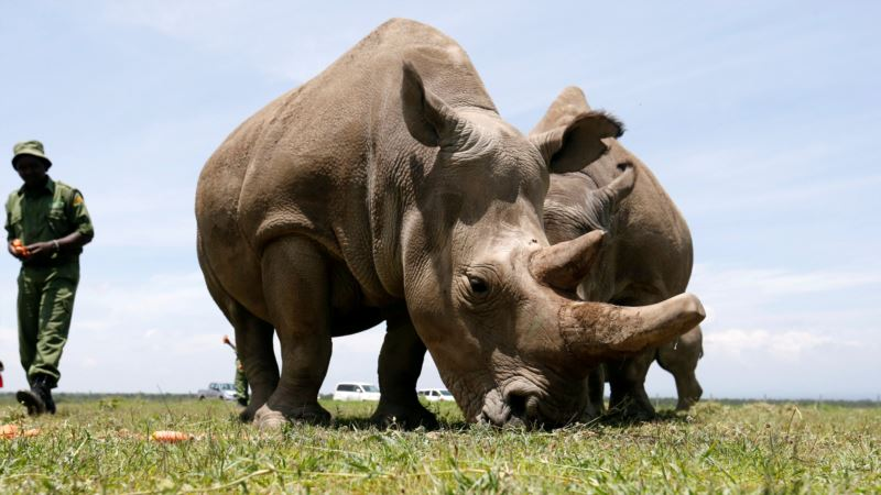 U Ženevi skup o zaštiti ugrožene faune i flore u svetu