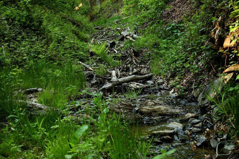 U drugom kvartalu proizvodnja šumskih sortimenata manja za 1,9 odsto