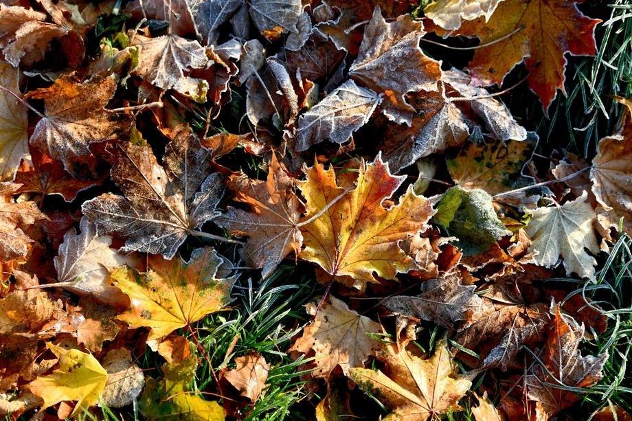 U većem delu Srbije oblačno, hladno i uglavnom suvo
