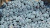 U zemlji šljiva sve više žbunova borovnice: Tržište Amerike i EU vapi za srpskim voćem