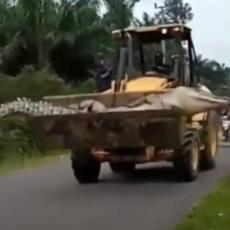 UHVATILI ZVER OD 500 KG I ODRUBILI MU GLAVU: Poznatiji kao Demon ovaj krokodil je terorisao meštane 50 GODINA (VIDEO)