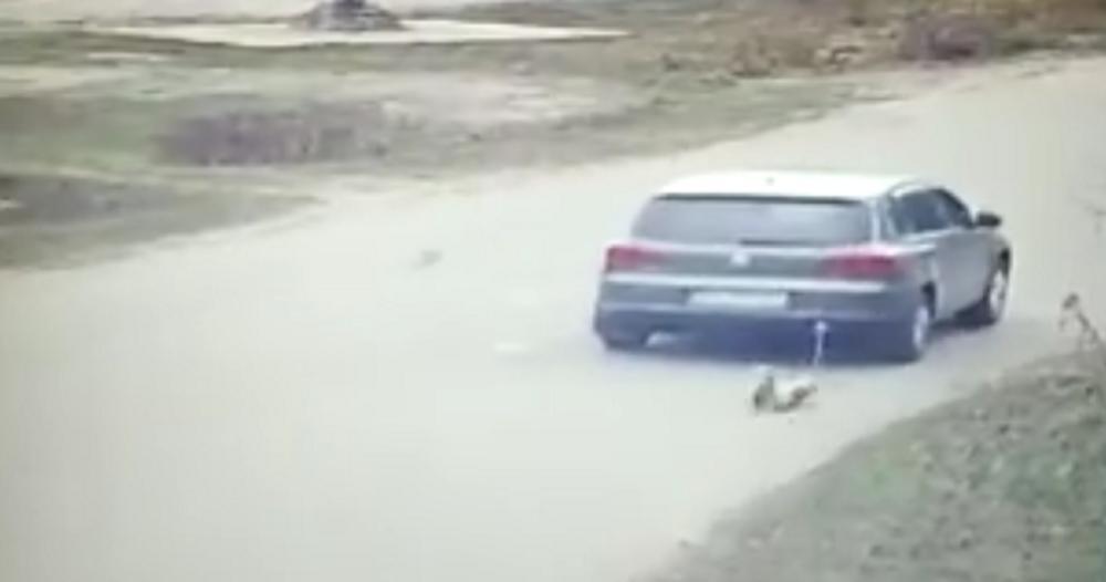 UKRAJINSKI POLITIČAR BRUTALNO MALTRETIRAO PSA: Snimljen kako kolima vuče nesrećnu životinju (VIDEO)
