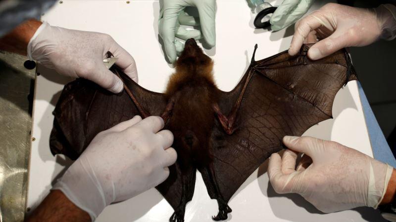 UN: Bojazan od porasta epidemija ako nastavimo eksploatirati divlje životinje