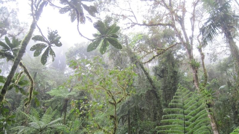 UNESCO proglasio prašumu Janj kod Šipova prirodnim dobrom od svjetskog značaja