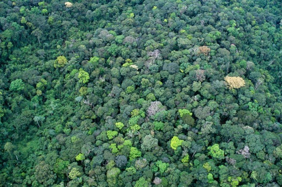USRED AMAZONSKE PRAŠUME OTKRILI ZID IZ LEDENOG DOBA: Na njemu su drevni crteži, a naučnike su ovi detalji zapanjili (FOTO)