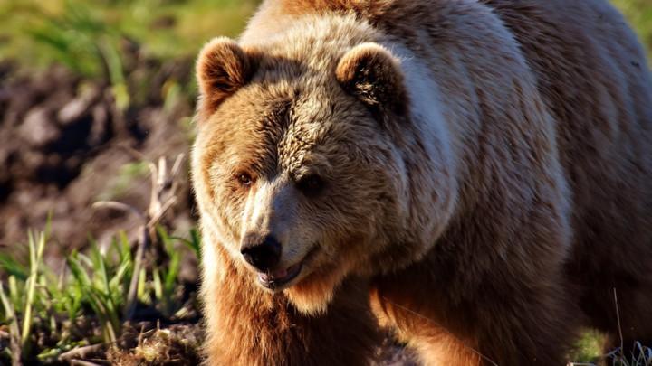 UŽAS!Medved muškarcu otkinuo stopalo i deo potkolenice