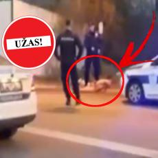 (UZNEMIRUJUĆI VIDEO) HOROR SCENA U BEOGRADU! Momak napao psa i počeo ŽIVOG DA GA GRIZE, policija hitno reagovala