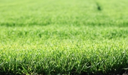 Udruženje poljoprivrednika: Otkupna cena pšenice će se znati kad Vlada Srbije odobri novac