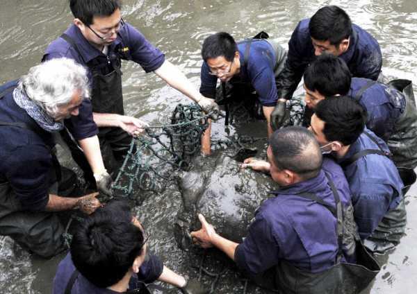 Uginula jedna od najređih vrsta kornjača na svetu