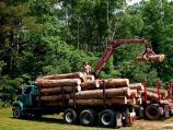 Uhapšeni šumari iz Pčinjskog okruga zbog korupcije