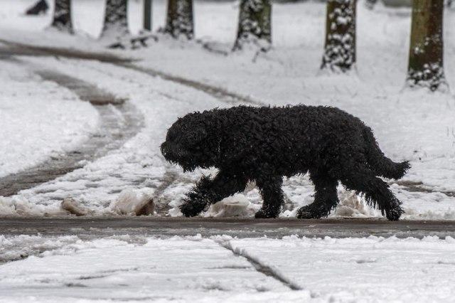 Vanredna situacija proglašena i ukinuta u istom danu: Psi lutalice više ne ujedaju u Prijepolju