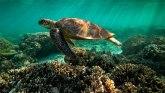 Unesko: Veliki koralni greben bi trebalo se nađe na listi ,,ugroženih
