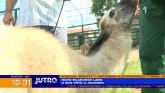 Upoznajte Dušku - novog stanovnika jagodinskog zoo vrta VIDEO