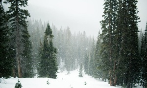 Upozorenje: Sutra sneg i vetar u centralnoj i južnoj Srbiji (FOTO)