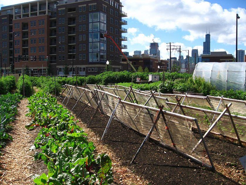 Urbana poljoprivreda kao finansijska podrška u vrijeme izolacije