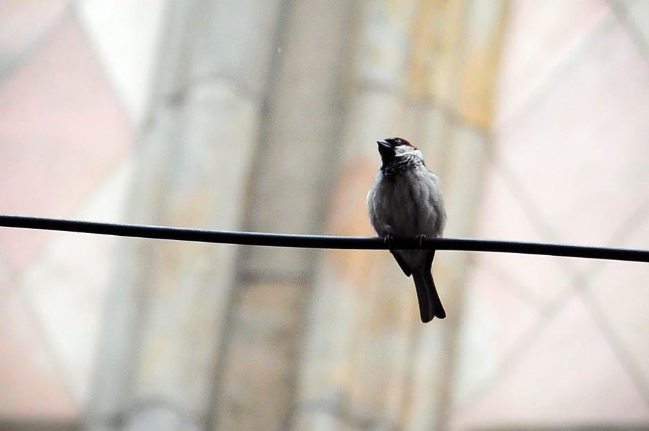 Usvojeno: Srbija štiti ptice selice