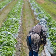 VELIKA ŠANSA ZA ŠUMADIJSKA GAZDINSTVA: Jedna grana poljoprivredne proizvodnje je spas za male proizvođače