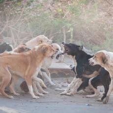 VETERINARSKE AMBULANTE PREPUNE: Psi ovih dana masovno NA LEKOVIMA, vlasnici OČAJNI!