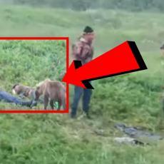 (VIDEO) HOROR NA NJIVI Ljudi zaspali u travi, a u sledećem momentu se ispred njih POJAVIO MEDVED, a onda...
