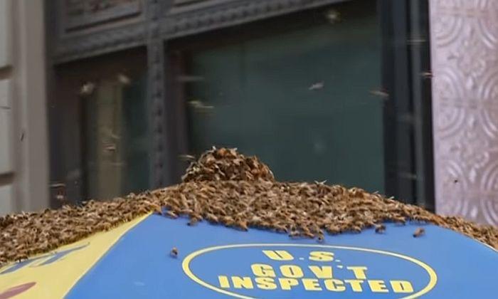 VIDEO: Roj pčela okupirao hot dog štand u Njujorku