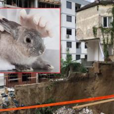 VILI JE SPASEN! Zeka iz urušene zgrade nađen živ: Bez vode i hrane 14 dana, ali jednom se ipak obradovao!