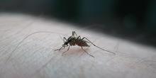 Novi Kneževac: Vanrednom situacijom protiv komaraca