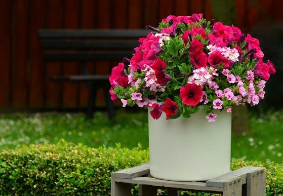 Vaše biljke i cveće će bujati, samo napravite ovaj rastvor! (RECEPT)