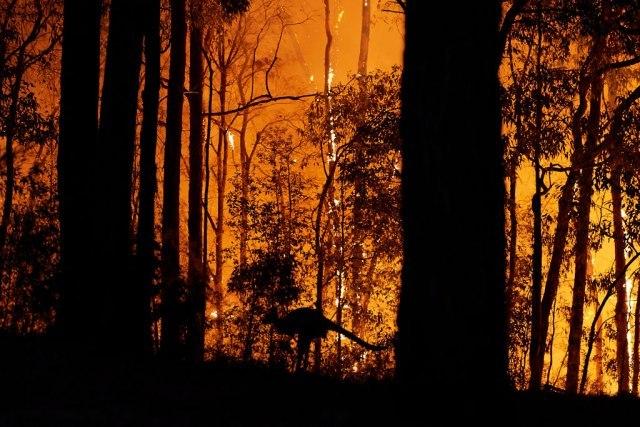 Vatrogasci u Australiji zapalili kontrolisani požar, 20 kuća izgorelo, 450 bez struje VIDEO