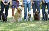 Vest o zabrani šetanja pasa u Srbiji stigla i u Ameriku
