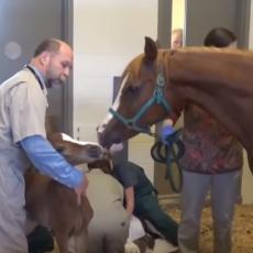 Veterinari su mislili da će konj imati normalno ždrebe - desilo se nešto NEVEROVATNO! (VIDEO)