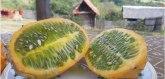 Vitaminska bomba iz Afrike rađa usred Dragačeva FOTO