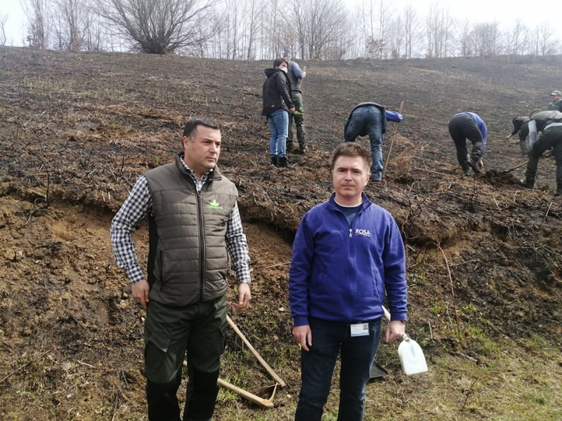 Vlasinka i Srbijašume posadili 500 stabala smrče  (FOTO)