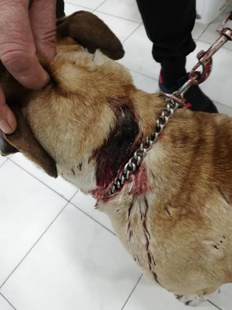 """""""Vlasnica"""" izbola psa nožem, on je samo stajao, ćutao i trpeo"""
