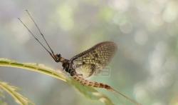 Vodeni cvet proglašen insektom 2021. godine (VIDEO)