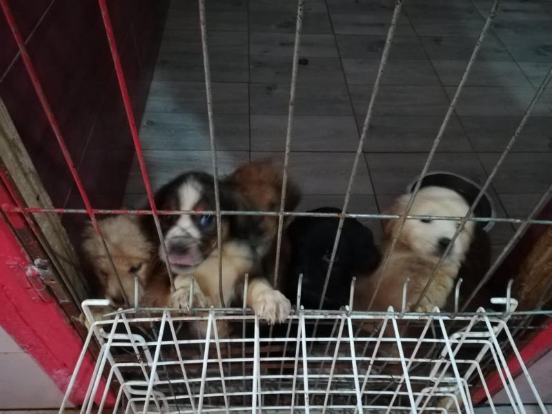Volonteri ukazuju da azil neće smanjiti pse na niškim ulicama, već sterilizacija i odgovornost vlasnika