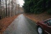 Vozač je dao gas i ubrzao: Holanđani ostavljaju decu u šumi da brže odrastu?
