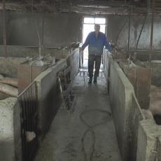 ZARADA KAO LOTO PREMIJA: Dragan iz sela Pranjani ne odustaje od svinjarstva, kako napraviti računicu?