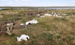 ZASTRAŠUJUĆI PRIZOR: 11.000 ptica palo mrtvo sa neba (VIDEO)