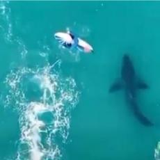 ZASTRAŠUJUĆI SNIMAK DRONOM: Velika bela ajkula prolazi ispod surfera, a onda nastaje borba za život (VIDEO)
