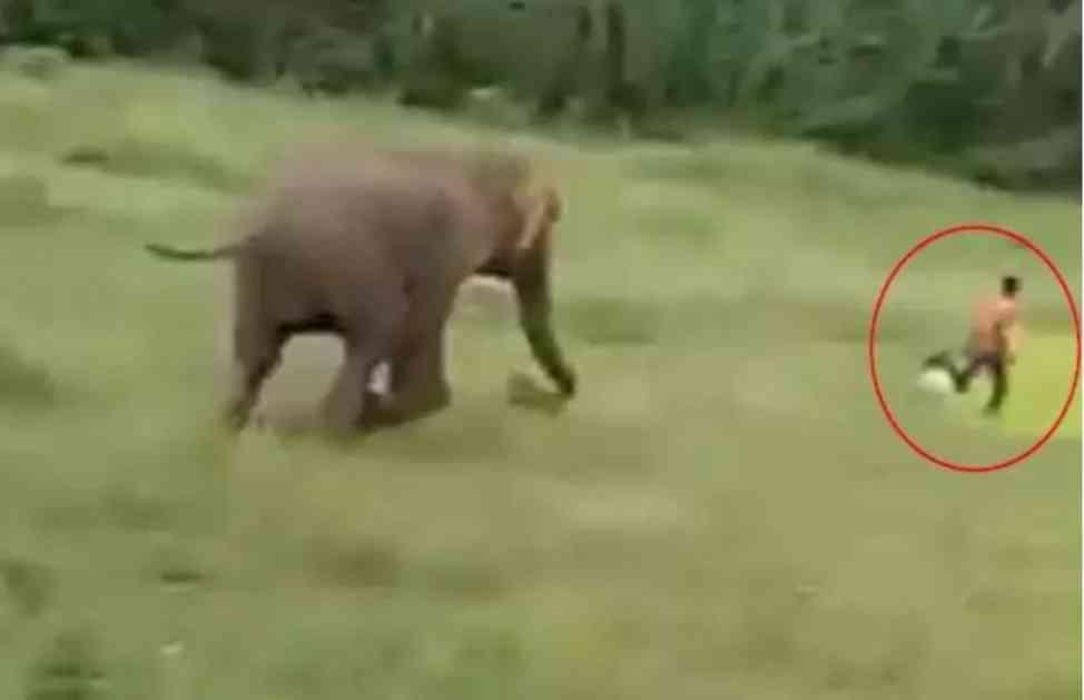 ZASTRAŠUJUĆI SNIMAK: Slon u sekundi pregazio prestravljenog dečaka! Mališan umro na mestu (UZNEMIRUJUĆI VIDEO)