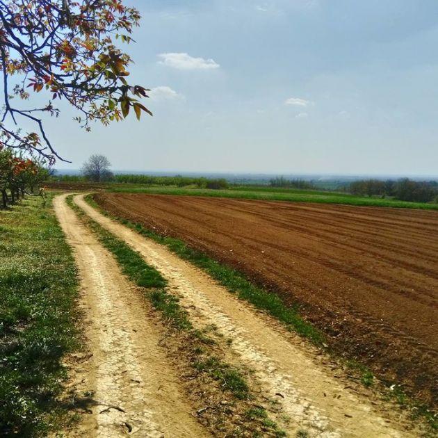 ZZ Stara Moravica ponudila u zakup 430 hektara njiva