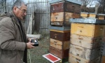 Za gram pčelinjeg otrova čak 90.000 uboda!