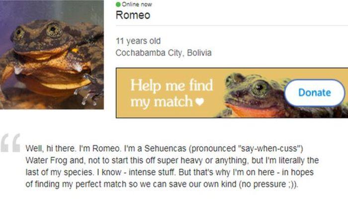 Žaba online upoznavanje