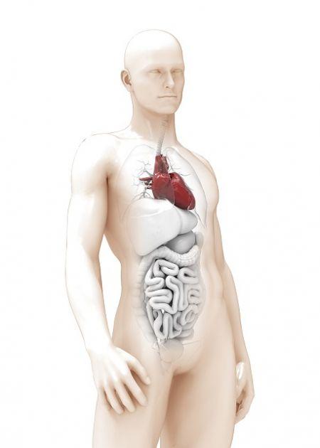 Zanimljivosti iz anatomije